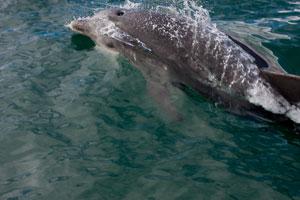 Dolphin Pittwater